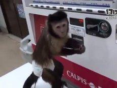 宠物做精的猴子自己