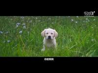 《命运2》中文真人宣传片之新传奇的崛起