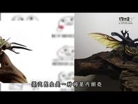 你知道蒸汽昆虫吗?是朋克与虫子的艺术碰撞