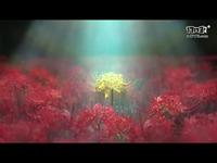《囚われのパルマ Refrain》预告片-iOS